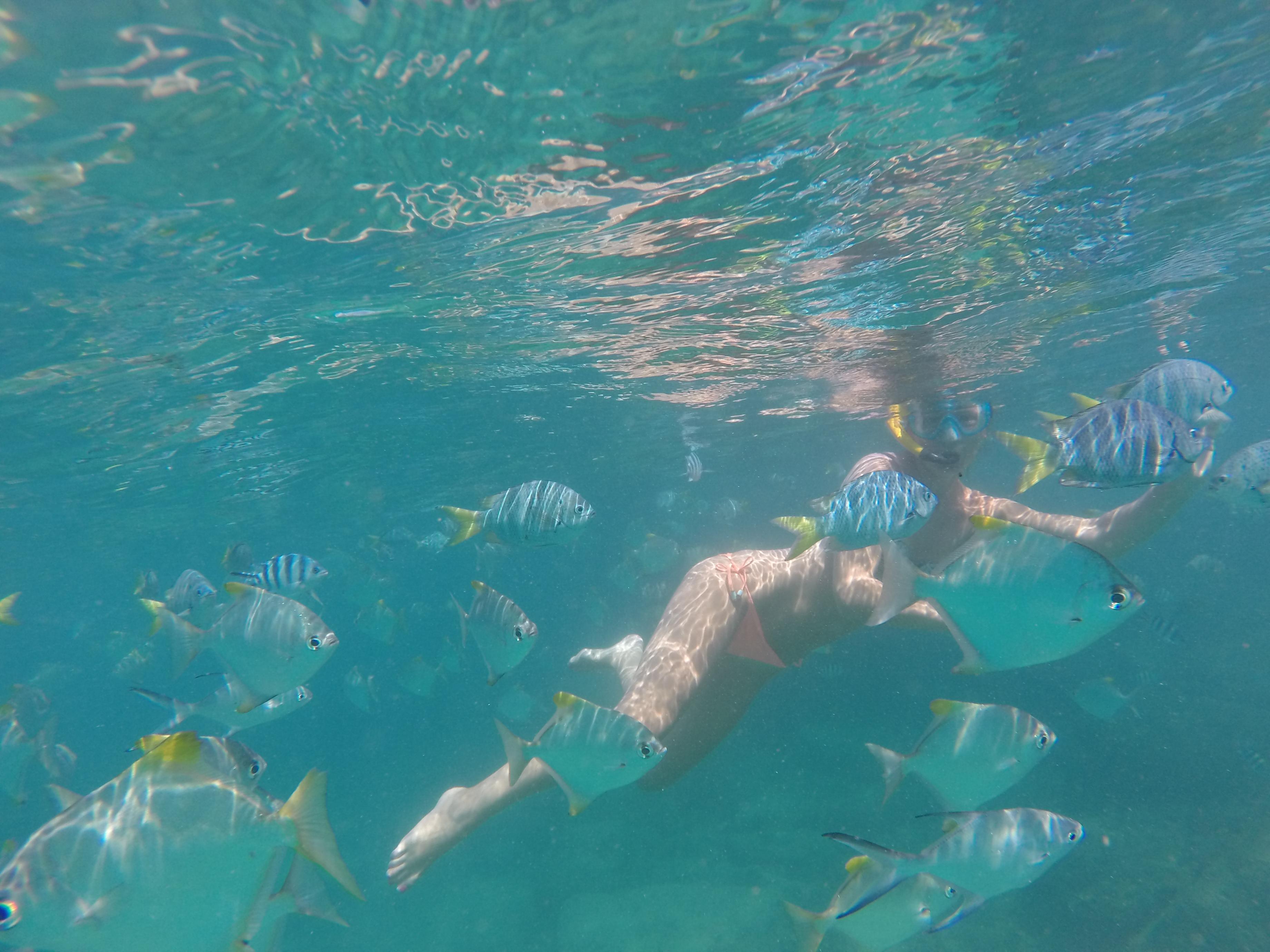 Nye venner under vann